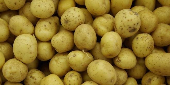 Preţul cartofilor a scăzut faţă de toamna anului trecut