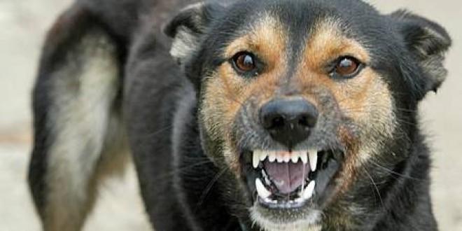 Creşte numărul persoanelor muşcate de câini