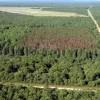 Luna plantării arborilor: Direcţia Silvică Harghita va împăduri o suprafaţă de 268 hectare