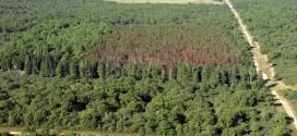 Fost angajat al unui ocol silvic, cercetat pentru un prejudiciu de peste 80.000 de lei