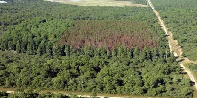Nu există soluţii pentru împădurirea suprafeţelor defrişate în primii ani după Revoluţie, rămase neregenerate