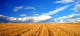 Sunt validate cereri de retrocedare a terenurilor către foştii proprietari pentru încă aproximativ 200 de mii de hectare