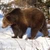 O ursoaică şi-a făcut bârlog în apropierea unor case din Băile Homorod, zona fiind izolată