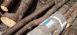 Salvamontiştii harghiteni fac apel la cetăţeni să nu mai taie copacii pe care se află marcajele turistice