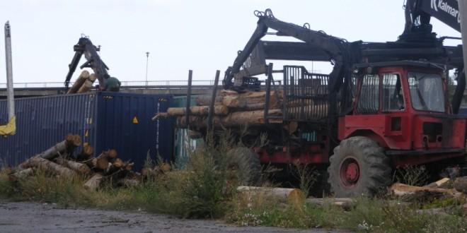 Despre exportul de buşteni din Harghita şi din ţară: Cât va suporta resursa silvică din judeţ aceste tăieri pentru vânzarea ca buştean?! (II)