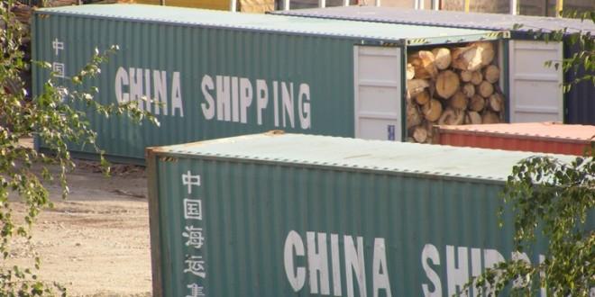 Despre exportul de buşteni din Harghita şi din ţară: Cât va suporta resursa silvică din judeţ aceste tăieri pentru vânzarea ca buştean?! (I)