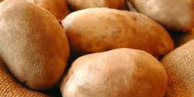 Cartoful de Harghita: Producţie record şi preţuri mici la producători
