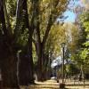 Freamătul autumnal al cuvintelor eminesciene