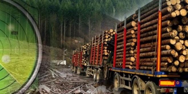 """Deşi existau reticenţe, se pare că implementarea """"Radarului pădurii"""" este un succes"""