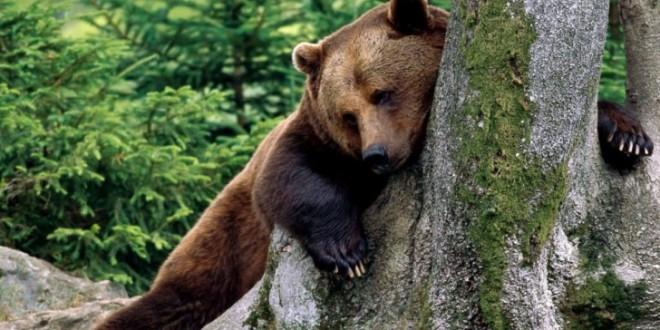 Doi bărbaţi, atacaţi de urs
