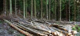 Doar 2.000 metri cubi de lemn de foc destinat populaţiei a vândut DS Harghita din 2019 până în prezent