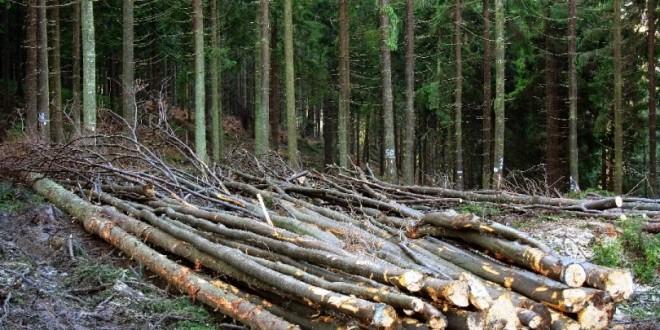 În acest an, până în prezent, 1.000 mc lemn de foc şi de construcţie au fost vânduţi de Direcţia Silvică Harghita către populaţie