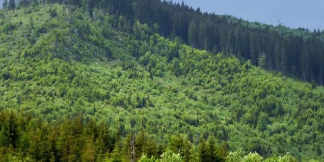 În perioada 2000-2006 din judeţul Harghita şi teritoriul adiacent a dispărut pădure de pe o suprafaţă totală de aproape 4.300 de hectare
