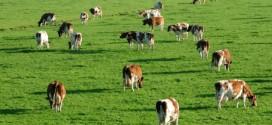 În mai începe Recensământul General Agricol