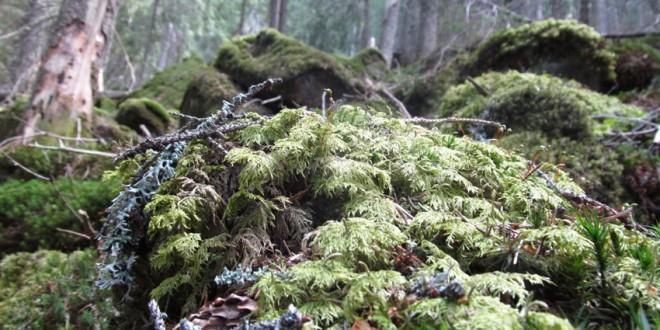 Decăderea sistemului de gospodărire unitară a pădurilor harghitene a început atunci când clasa politică reprezentată prin parlamentarii locali a început să se implice în administraţia silvică