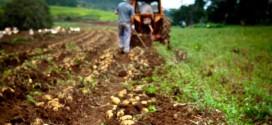 Sprijin financiar pentru stimularea angajării tinerilor în agricultură, acvacultură şi industria alimentară