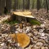 În Harghita se taie ilegal mai puţină pădure decât în alte judeţe