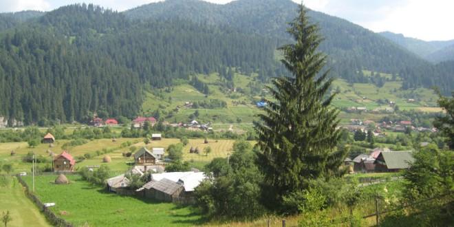 Transilvania furată: Caracatiţa verde îşi extinde tentaculele în centrul României (I)