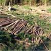 Din analiza Direcţiei Silvice Harghita pe trimestrul I 2017: 102 mc material lemnos tăiat ilegal, în scădere substanţială faţă de aceeaşi perioadă a anului trecut