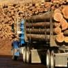 Licitaţiile Direcţiei Silvice privind valorificarea masei lemnoase boicotate de agenţii economici nu au afectat activitatea instituţiei
