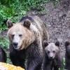 Ursoaica de la Tuşnad va fi relocată