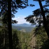 Compensaţii financiare pentru proprietarii de pădure din zonele protejate