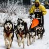 Concurs de atelaje canine la Băile Tușnad