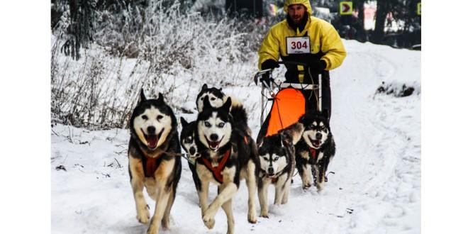 Concursul de atelaje canine de la Borsec, amânat