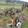 O suprafaţă de aproape 300 de hectare va fi împădurită în acest an de Direcţia Silvică Harghita