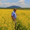 Pentru că în agricultură se recomandă rotaţia culturilor, aşa au apărut în judeţ câteva hectare de muştar