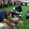 Doar 15 familii care se ocupă de păstorit mai trăiesc în zona Gheorgheni