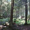 Premieră pentru judeţul Harghita: despăgubiri pentru proprietarii pădurilor aflate în arii naturale protejate