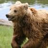 Urşii – un potenţial valoros pentru regiune