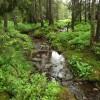 Idei de evadare în natură: Cascada şi mlaştina Seche (Szökő)