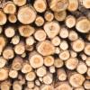 Mai puţin de jumătate din lemnul de foc oferit spre vânzare de Direcţia Silvică Harghita persoanelor fizice a fost cumpărat de populaţie