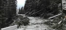 Materialul lemnos doborât sau rupt de vânt, în luna februarie, de pe suprafeţele administrate de DS Harghita a ajuns la aproximativ 260.000 metri cubi
