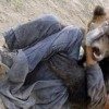 2017: Anul în care atacurile urşilor au fost cel mai mult în atenţia opiniei publice