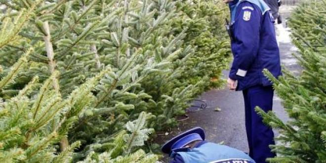 Ample acţiuni pentru prevenirea şi combaterea tăierii, transportului, prelucrării şi comercializării materialelor lemnoase şi a pomilor de Crăciun