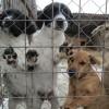 Miercurea-Ciuc: Jumătate dintre câinii din adăpostul de la marginea oraşului, abandonaţi de stăpâni