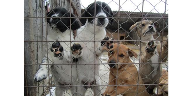 Câini fără stăpân din zona Ciucului, adoptaţi în Germania