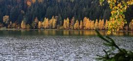 Au fost finalizate studiile privind calitatea apei Lacului Sfânta Ana necesare obţinerii autorizaţiei de mediu pentru recoltarea carasului argintiu