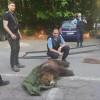 Noua casă a ursuleţului Sanyi este Sanctuarul din Zărneşti