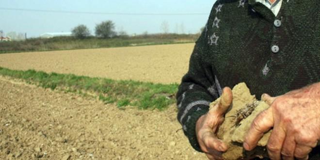 Deficitul de apă din sol afectează grav culturile agricole