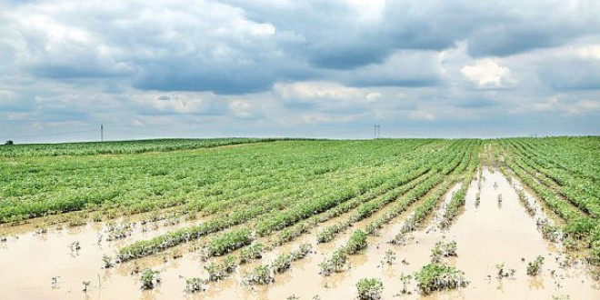 Sute de hectare cultivate cu cartofi şi grâu, sub apă; pierderile sunt însemnate