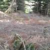 Despre efectele, în timp, ale tăierilor ilicite de material lemnos (II)