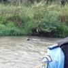 Urșii au vizitat din nou orașul Miercurea Ciuc