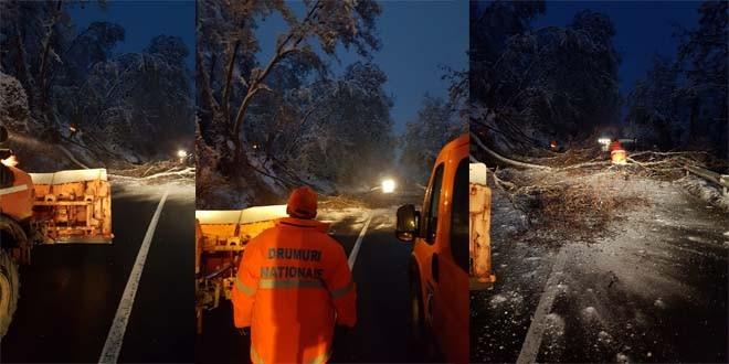 Drumarii taie arborii care pun în pericol siguranţa rutieră pe DN 13/A; circulaţia rutieră se desfăşoară cu întreruperi
