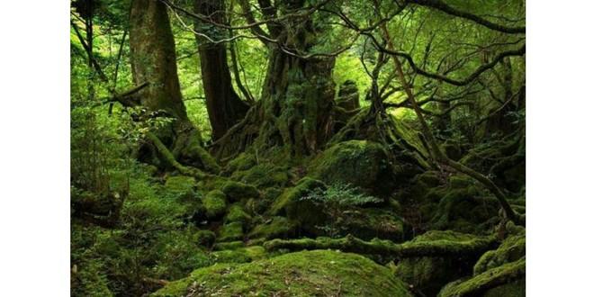 Situaţia pădurilor din România, conform inventarului forestier naţional