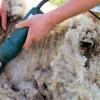 Ajutor de minimis pentru lână