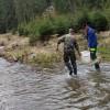 Elevii Liceului Tehnologic Corbu au repopulat Valea Corbului cu 2.500 de puieţi de păstrăv indigen